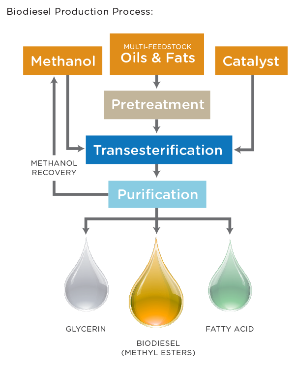 Biodiesel_production_process